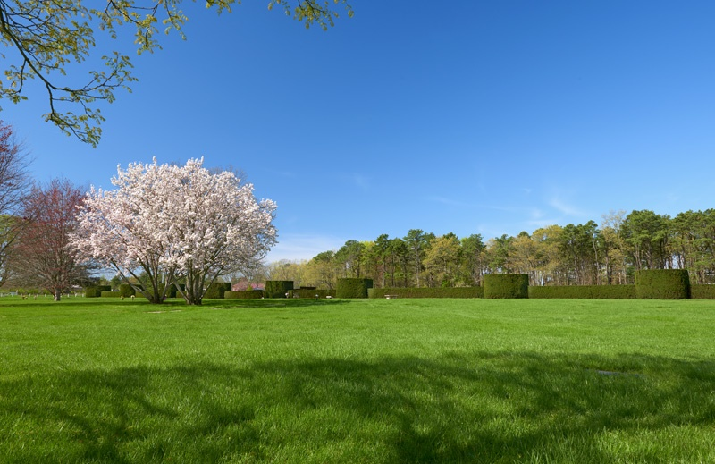 Cherry Blossom with Green Grass at Pinelawn Memorial Park And Arboretum