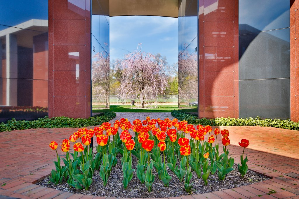 Tulips in Mausoleum Complex III