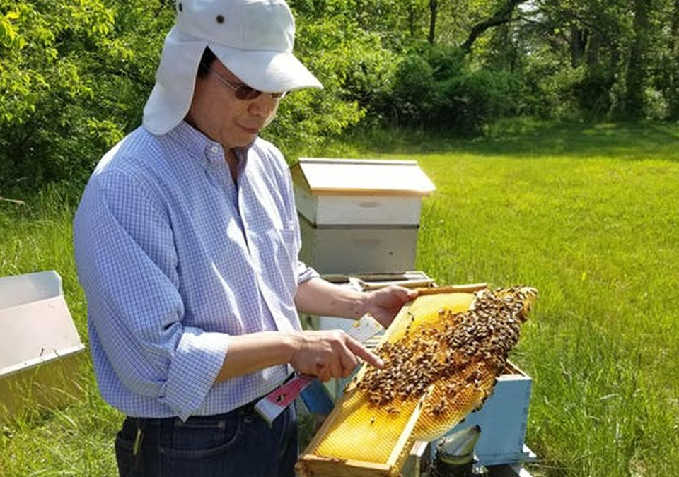 Honeybee expert pointing at honeycomb with bees on it