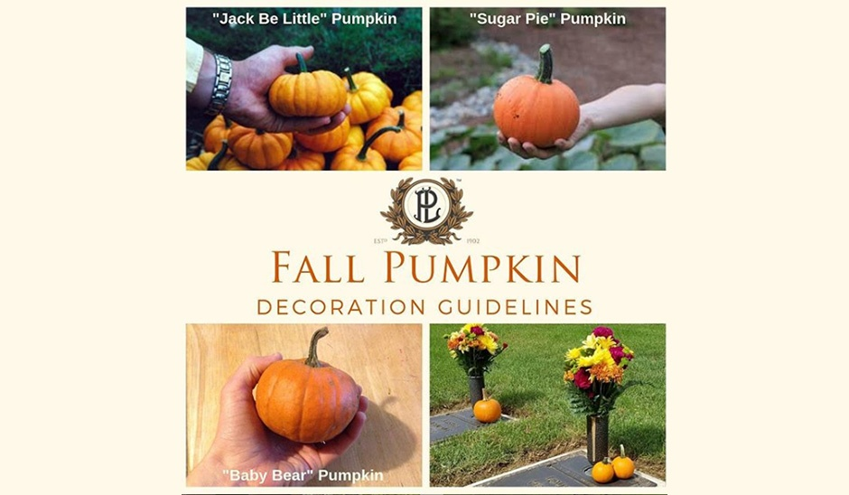 Pumpkin decoration guidelines different pictures of pumpkins