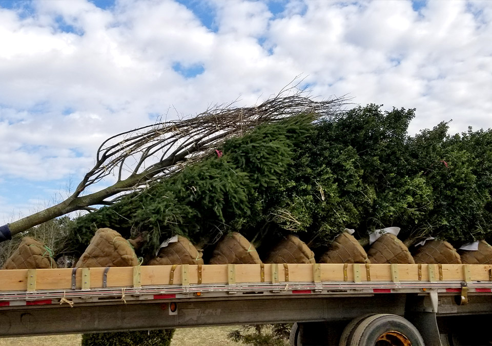 tree delivery stacked on truck