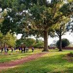 Group of people outside doing yoga in the distance under shady trees and on green grass