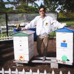 Bee keeper with bee hives