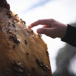 hand touching honey comb with honey bees
