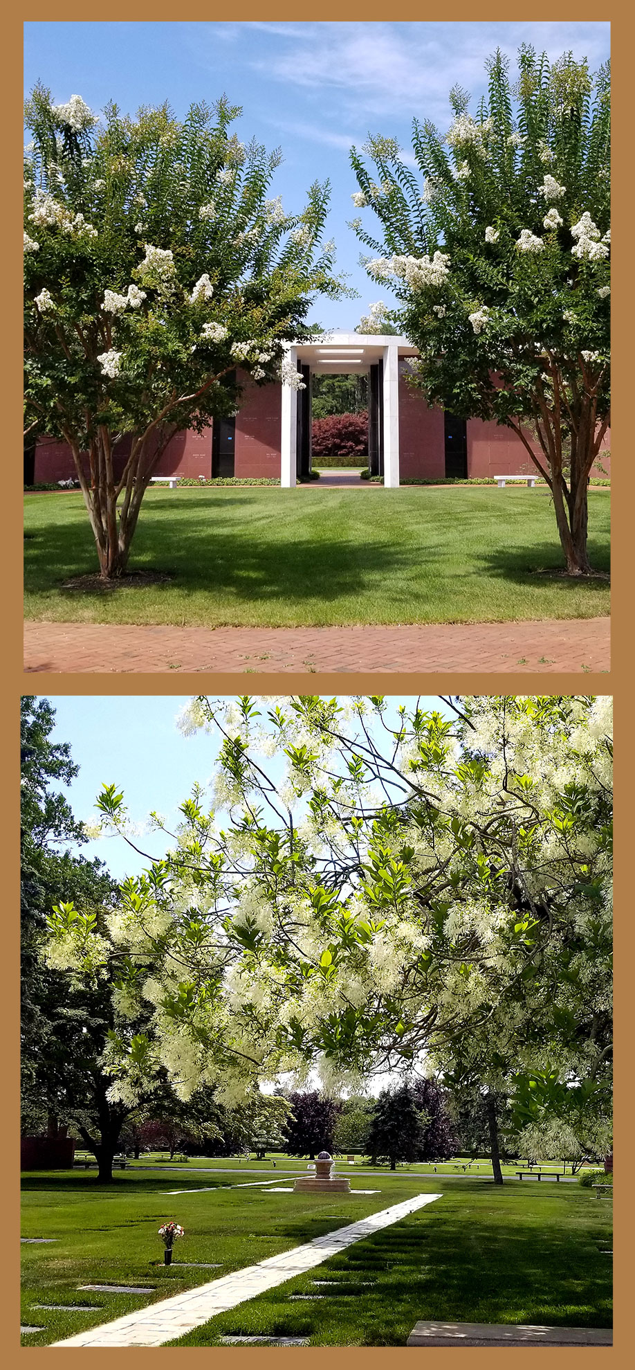 two images of spring trees
